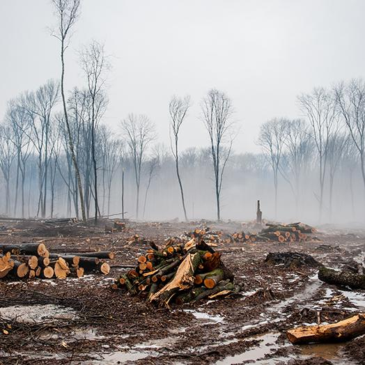 Deforestation in Indonesia piles of logs in a cleared area of a forest with smoke in background